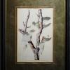 RIP Ivory-Billed Woodpecker