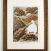 RIP Charles Island Tortoise: After Ernst Haeckel