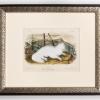 RIP Hare-Indian Dog: After John Woodhouse Audubon