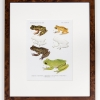 RIP Isla Bonita Treefrog and South Fork Treefrog: After David M. Dennis