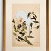 RIP Louisiana Parakeet: After John James Audubon
