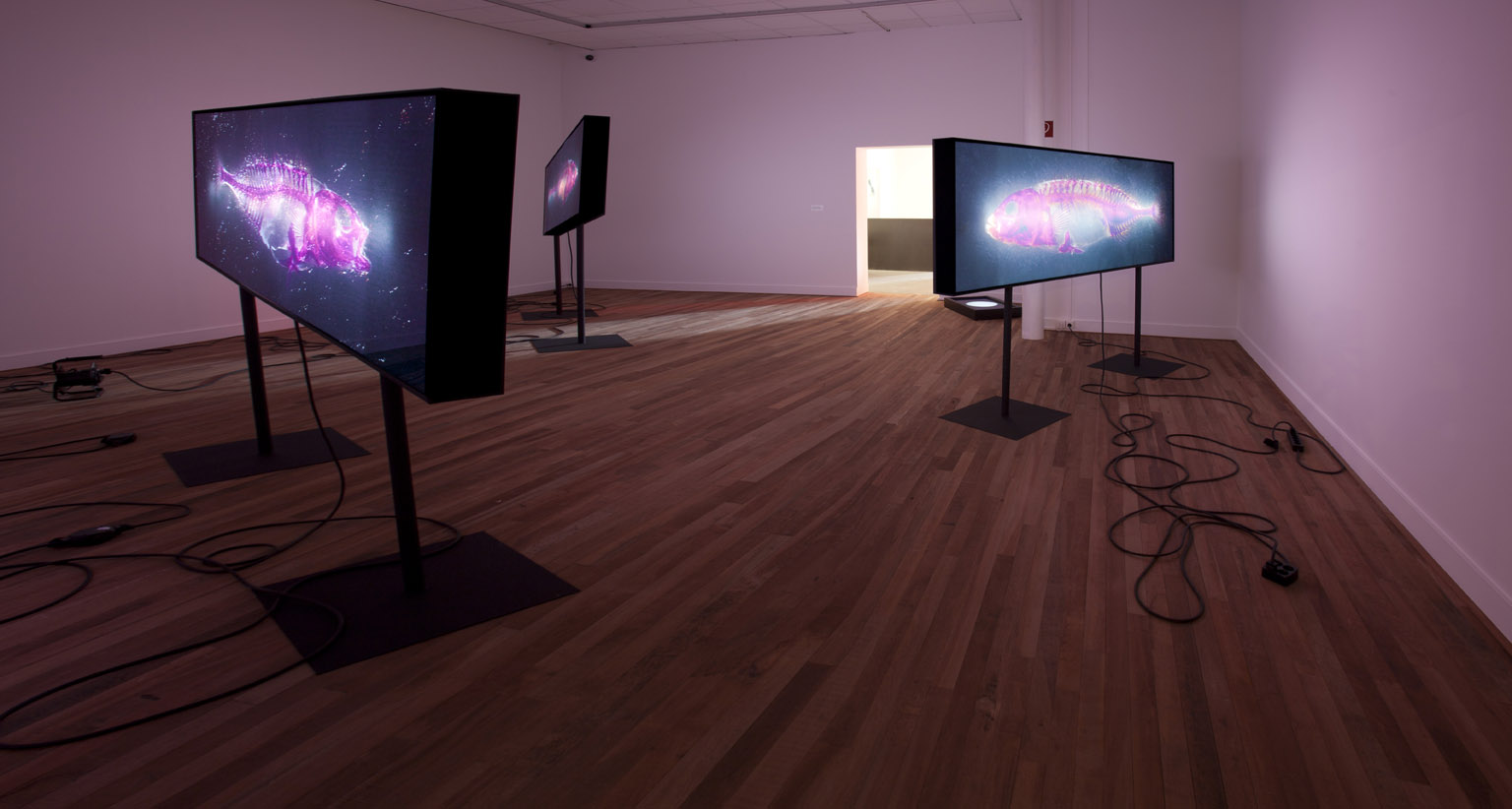 Ti-tâne, Brandon Ballengée, Museum Het Domein, 2014.