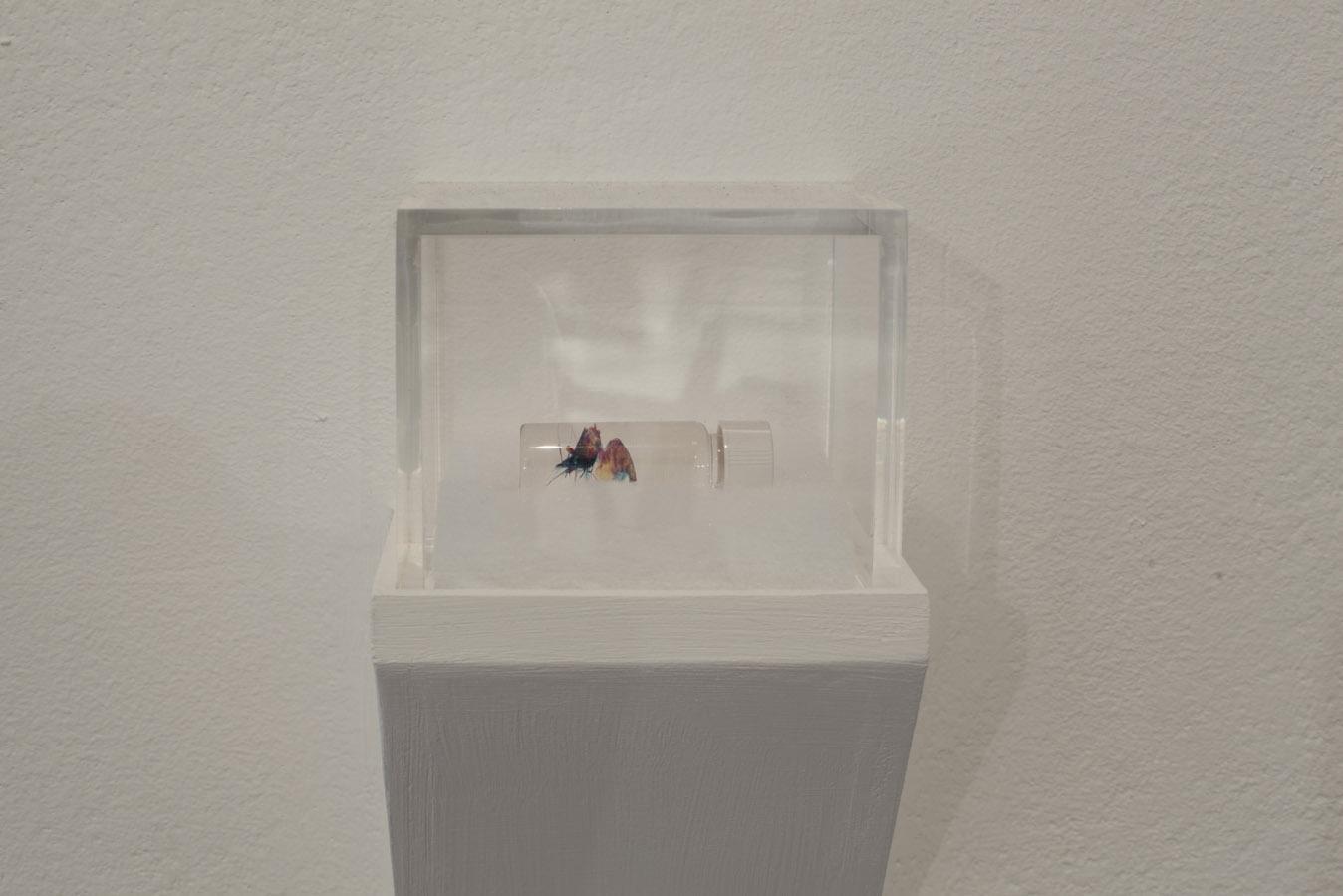 Tear of Ochùn, Brandon Ballengée, Museum Het Domein, 2014.