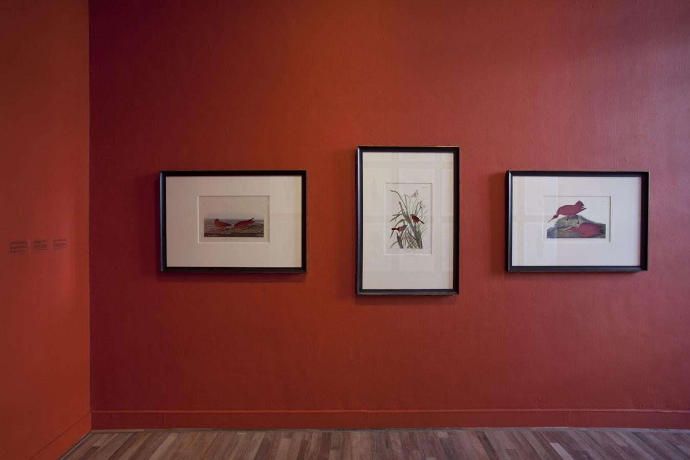Frameworks of Absence, Brandon Ballengée, Museum Het Domein, 2014.