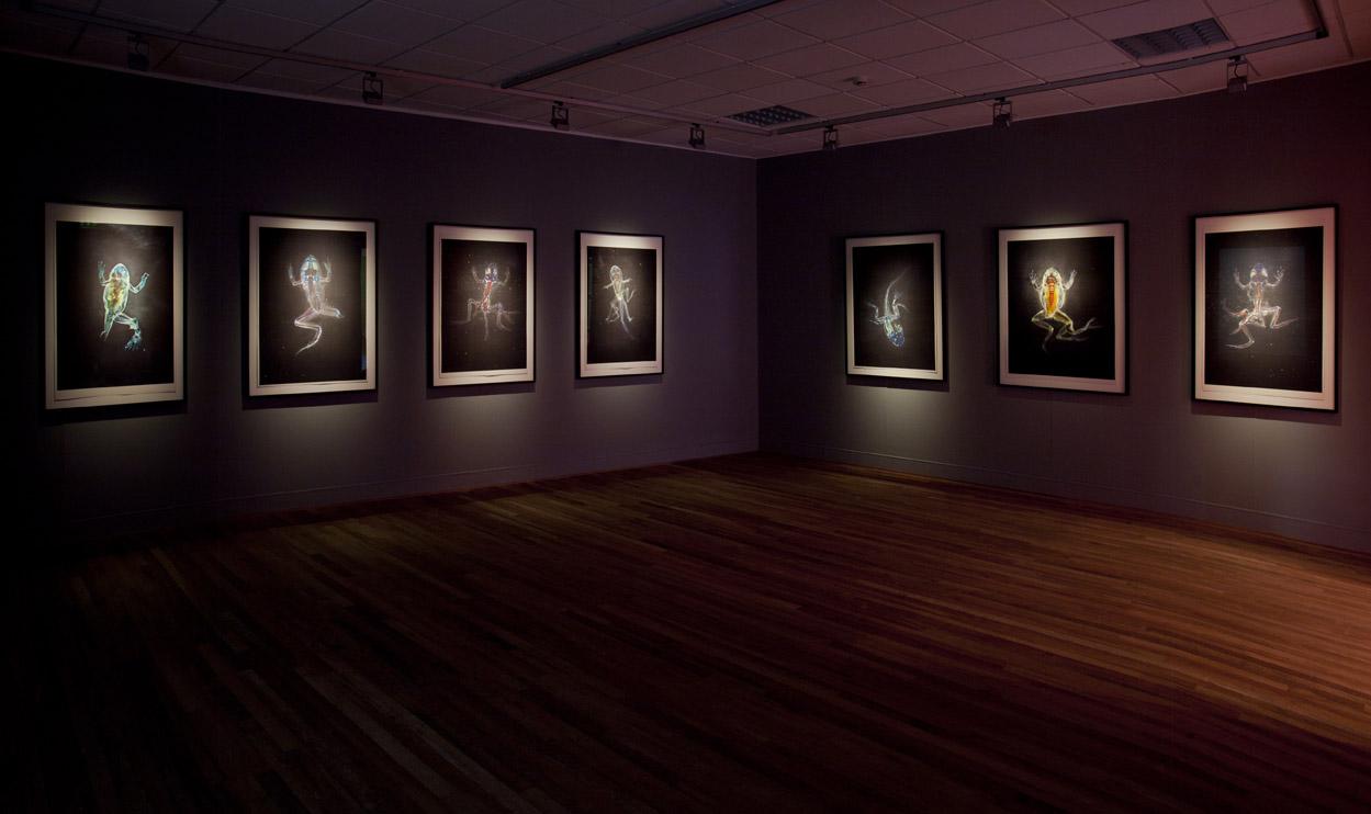Malamp Reliquaries, Brandon Ballengée, Museum Het Domein, 2014.