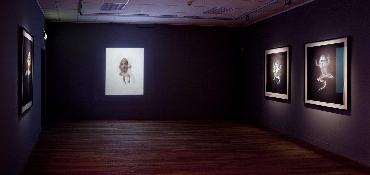 Requiem pour Flocons de Neige Blessés, Brandon Ballengée, Museum Het Domein, 2014.