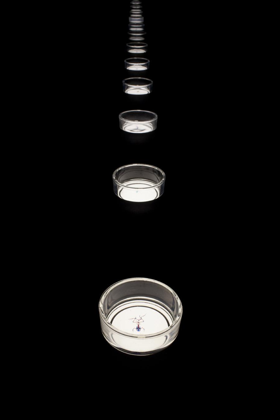 Styx, Brandon Ballengée, Museum Het Domein, 2014.