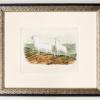 RIP Audubon's Bighorn Sheep: After John Woodhouse Audubon