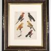 RIP Cayenne Parakeet: After Friedrich Johann Justin Bertuch