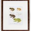 RIP Isla Bonita Treefrog and South Fork Treefrog: After David M. Dennis