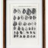 RIP Pyramid Slitshell Snail: After Walter Freeman Webb