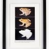 RIP Tlaloc\'s Leopard Frog: After David M. Hillis