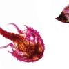 RIP Batfish and Butterflyfish