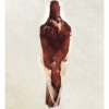 DP 15.2: Red Magpie Tumbler (verso)