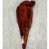 DP 34: Common Yellow Tumbler