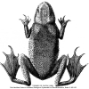 Species Reclamation